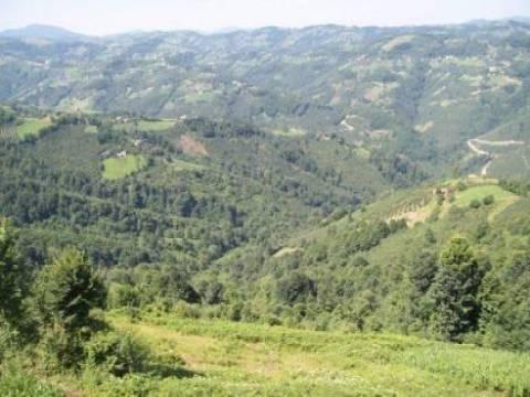 Orman Kanununun 17/3 ve 18. maddelerinin uygulama yönetmeliğinde değişiklik yönetmeliği!