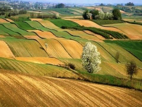 Hazine arazileri hangi koşullarda kiracılarına satılacak?
