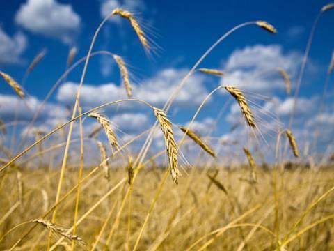 Tarım arazilerinin fiyatları yüzde 20 yükseldi!