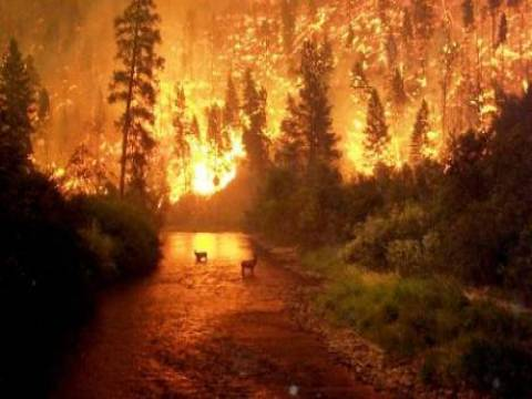 Tekirdağ'da bir fabrikada yangın çıktı!