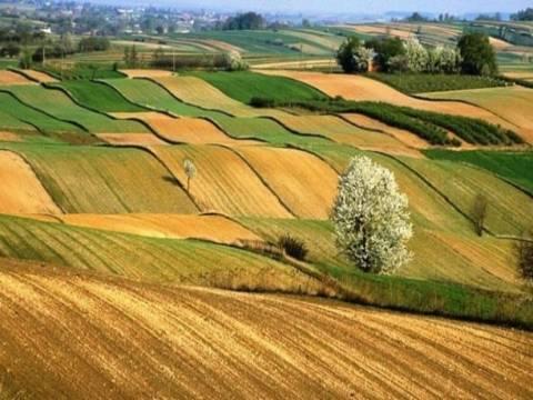 Kiracılar Hazineye ait tarım arazilerini doğrudan alabilecek!