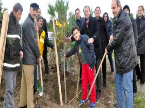 Büyükçekmece Alkent Mahallesi'nde kesilen 201 çam ağacının yerine 251 ağaç dikildi!