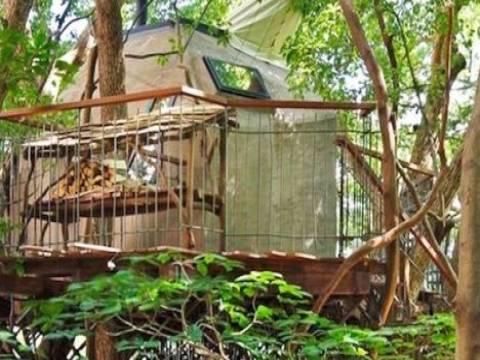 Japon mimarın ağacın tepesindeki ilginç evi!