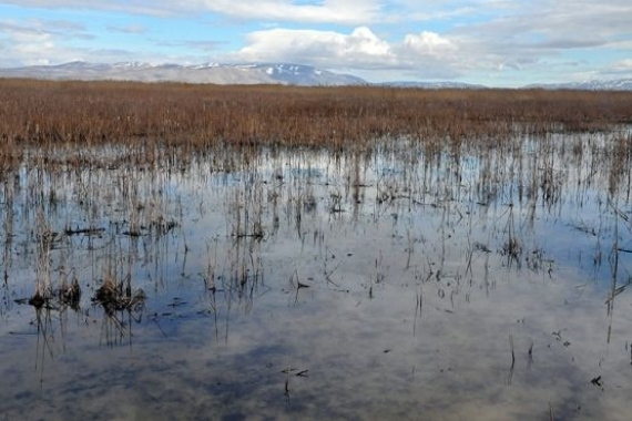 Akşehir Gölü kesin korunacak hassas alan ilan edildi!
