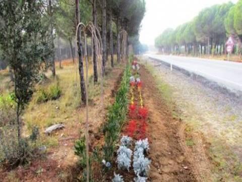 Gelibolu Tarihi Milli Parkı'nın yol güzergâhlarına 45 bin 100 adet fidan dikildi!