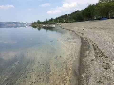 Sapanca Gölü'nün kıyısı sarı polen tabakasıyla kaplandı!