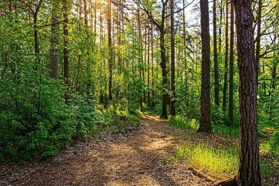 Orman Kanununun 16. maddesinin uygulama yönetmeliği değişikliği!