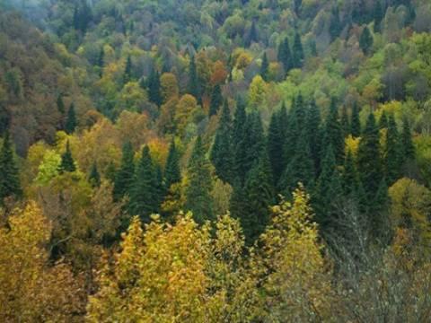 Orman Kanunu 17/3 ve 18. maddelerinin uygulama yönetmeliğinde değişiklik!