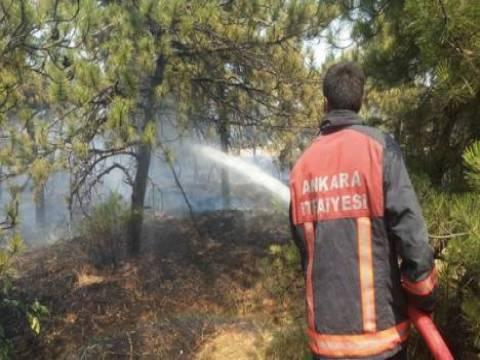 Atatürk Orman Çiftliği'nin yüzde 40'ı yok oldu!
